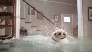 Homeowners Insurance Quote | The Flooded House Dog Diving Competition